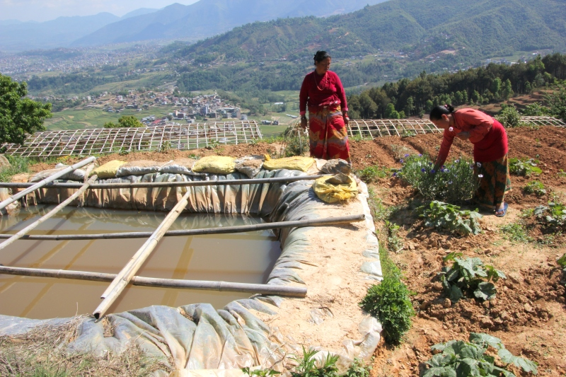 Tirtha & Mitha with their water harvest, greenhouses below and new plants.