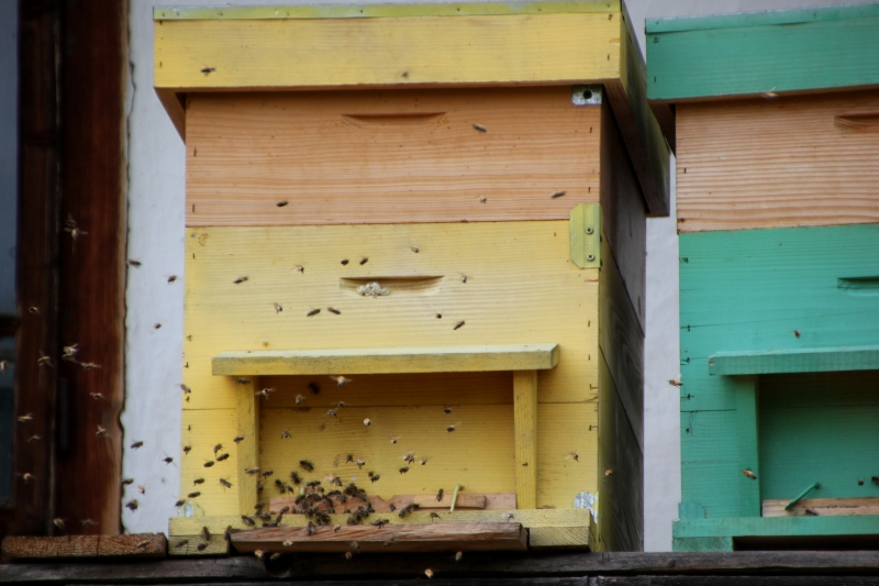 2 of Claudia's 5 hives.