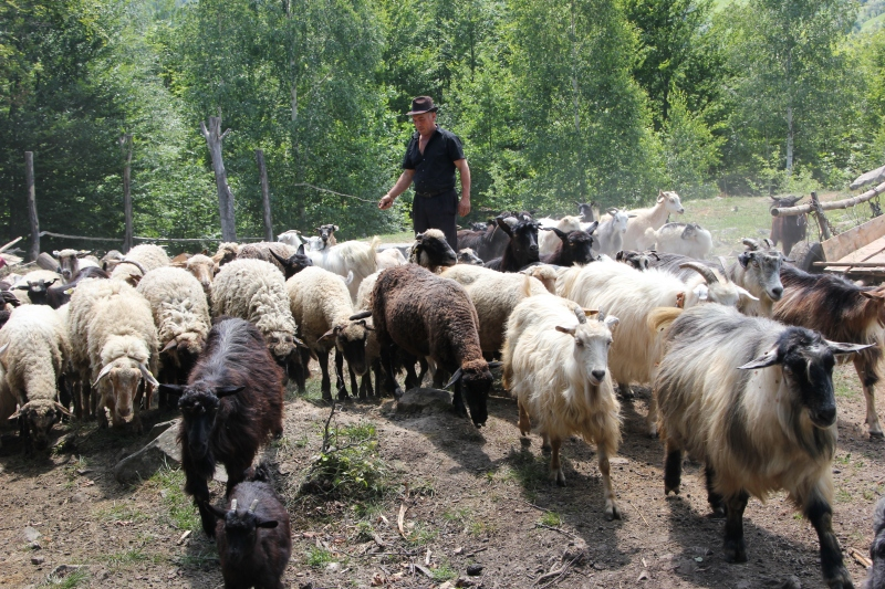 asian singles in sheep ranch Sheep, lamb, farm, ambience, ambiance, sleeping aid, sheep sound effect, farm sound effect, lamb sound effect, animal sound effects, ranch sound effect sheep sounds mp3 sheep sounds crossword.