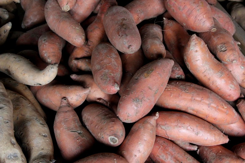 Sweet potatoes, a high value crop in the Delta.