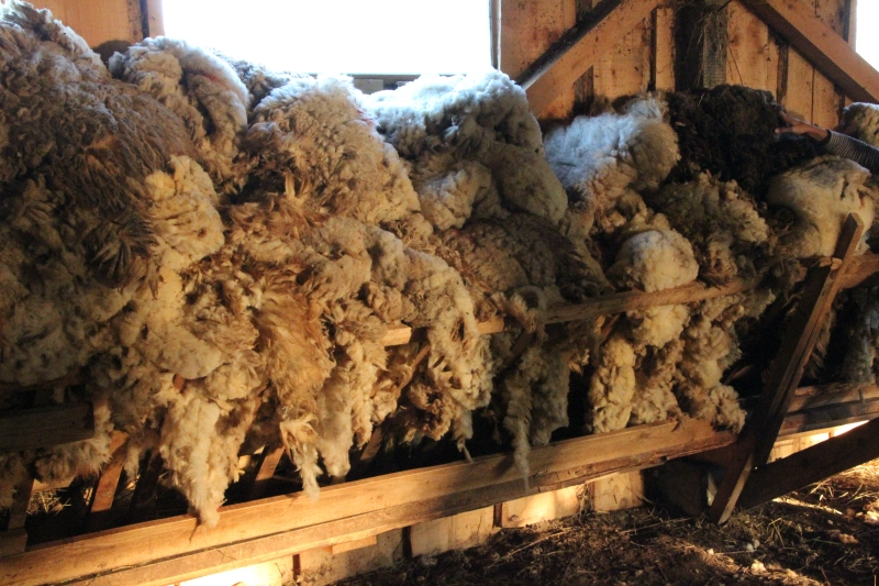 Sheep's wool in the barn.