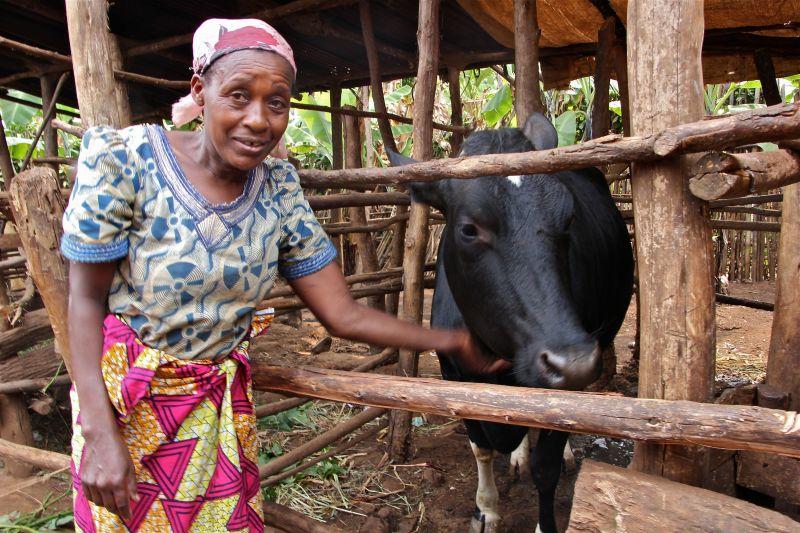 Veneranda Mukagakwandi & her cow.