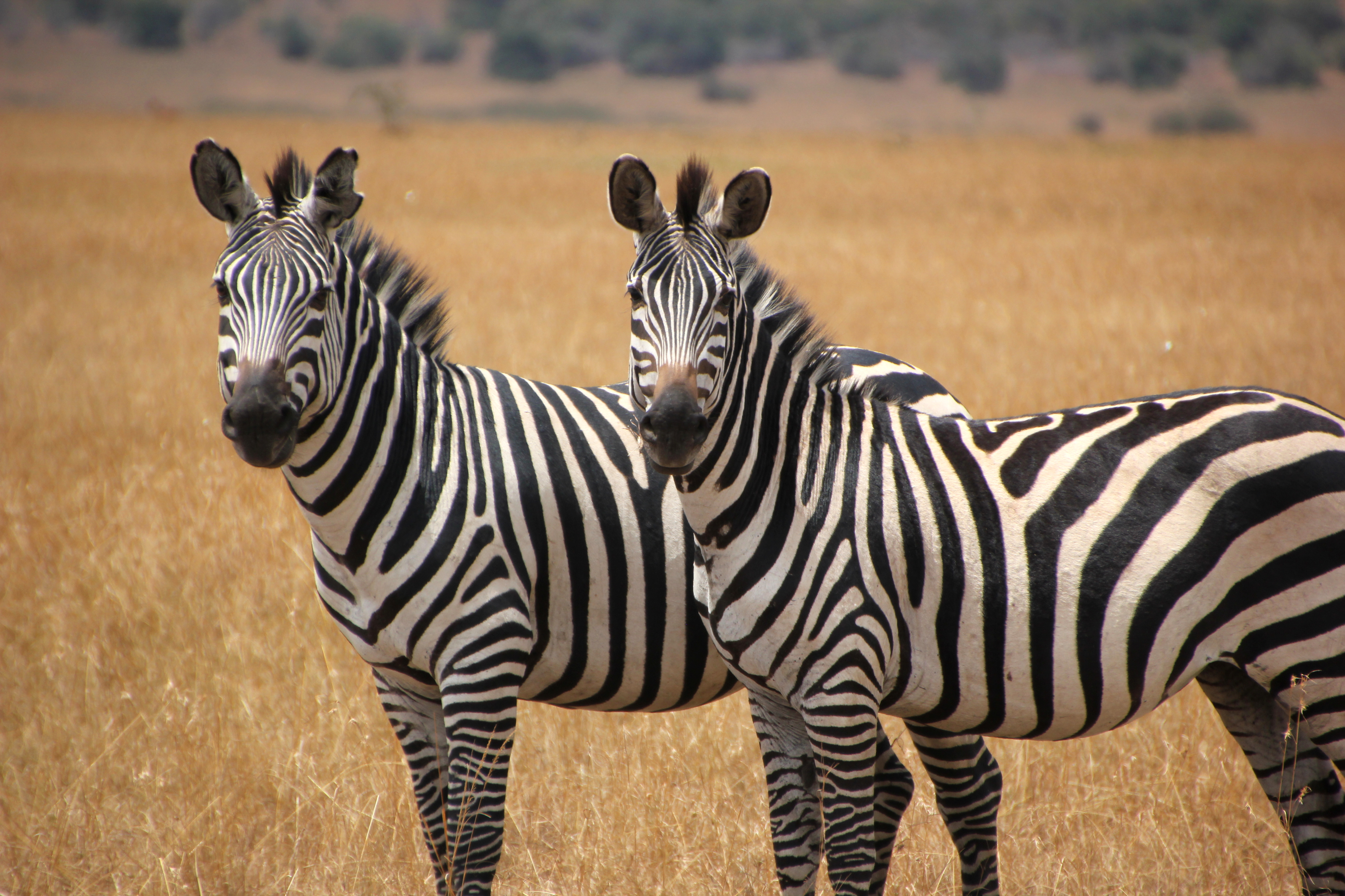 Wallpapers Wild Animals