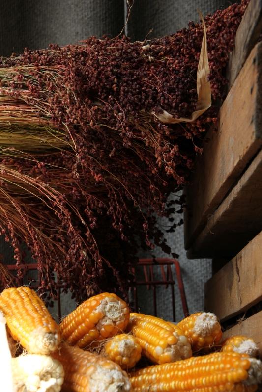 Sorghum & corn