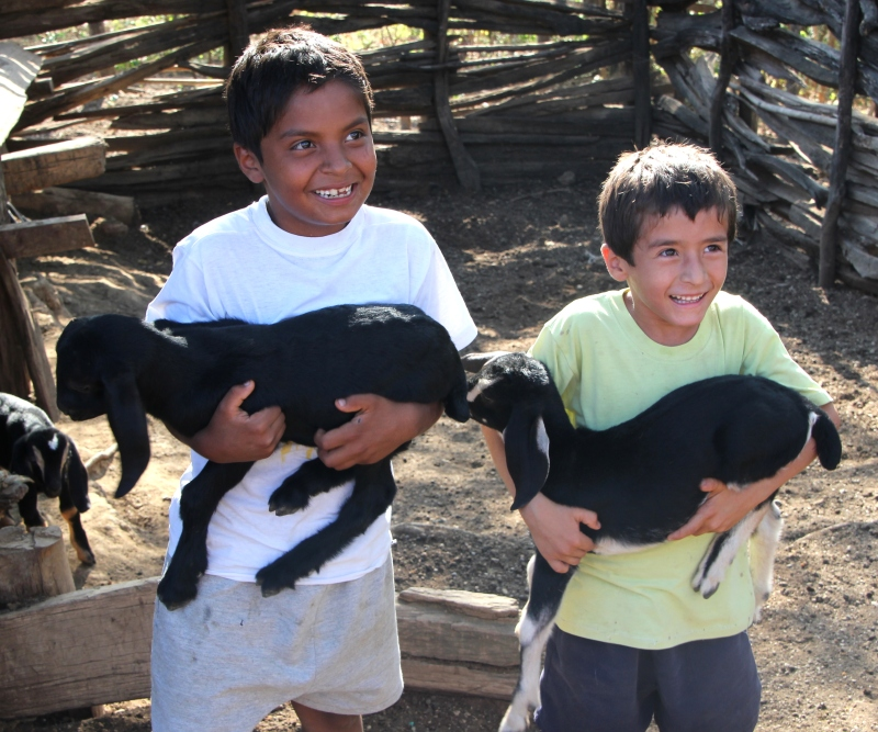 Alexis, Darling & goats