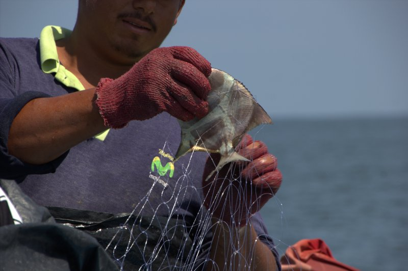 Smaller catch... fewer fish