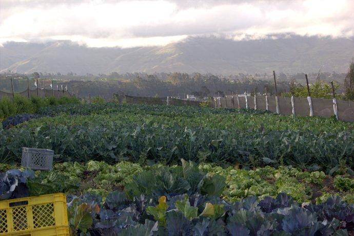 Gloria's farm
