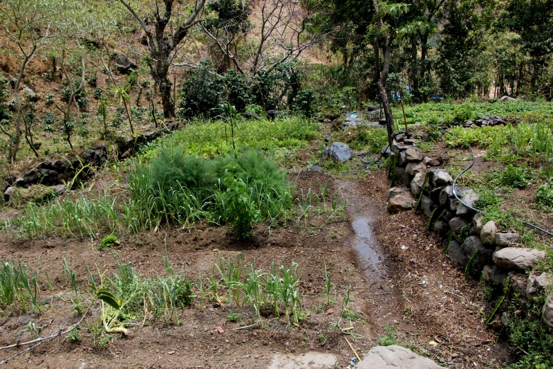 The tipico plot size in Guatemala.