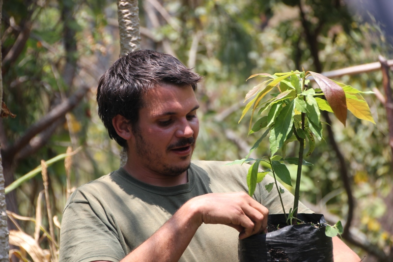 A quick lesson in grafting avocado trees (Shad's grows 5 varieties).