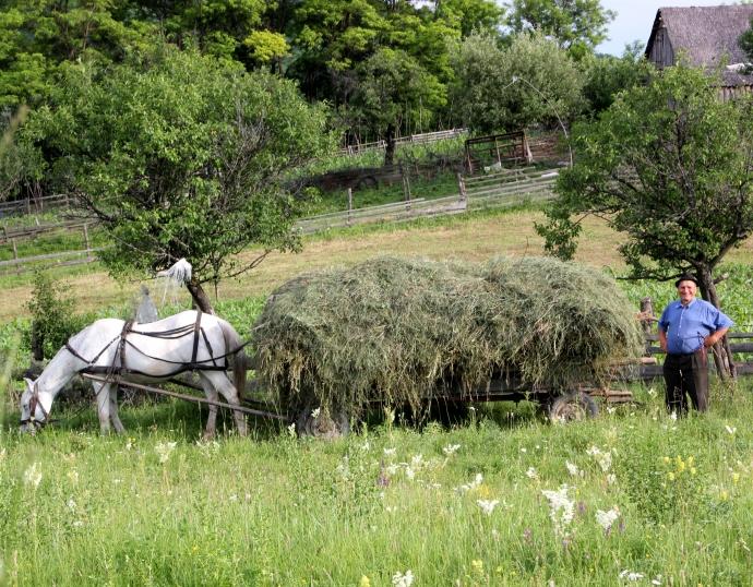 farmer hay
